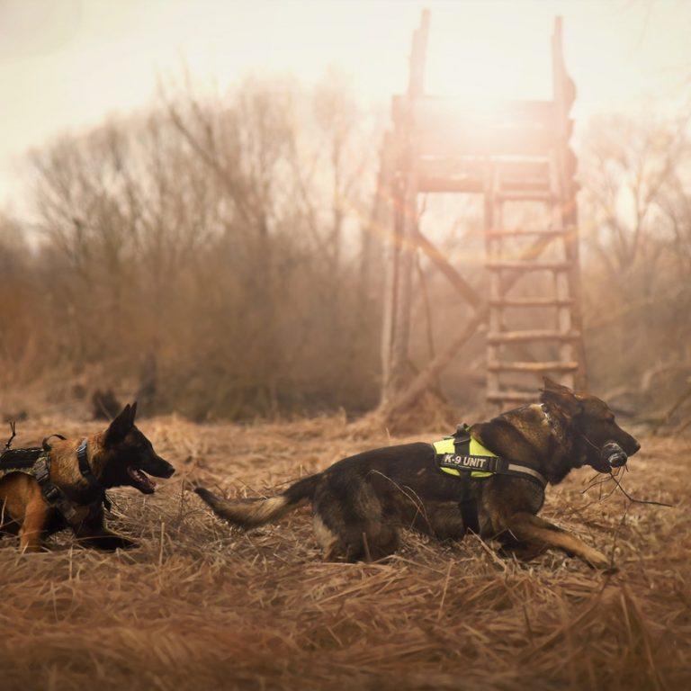 Hundar som spårar
