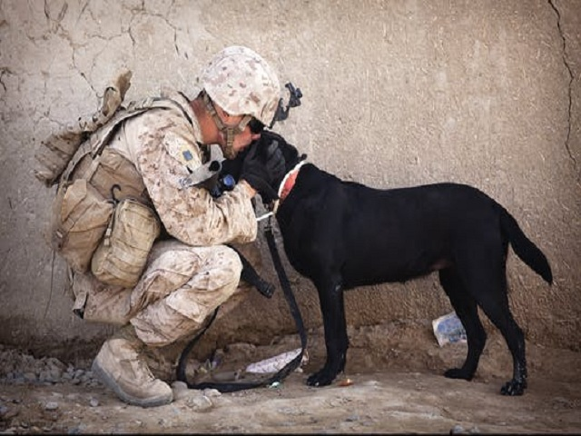 Soldat med svart hund